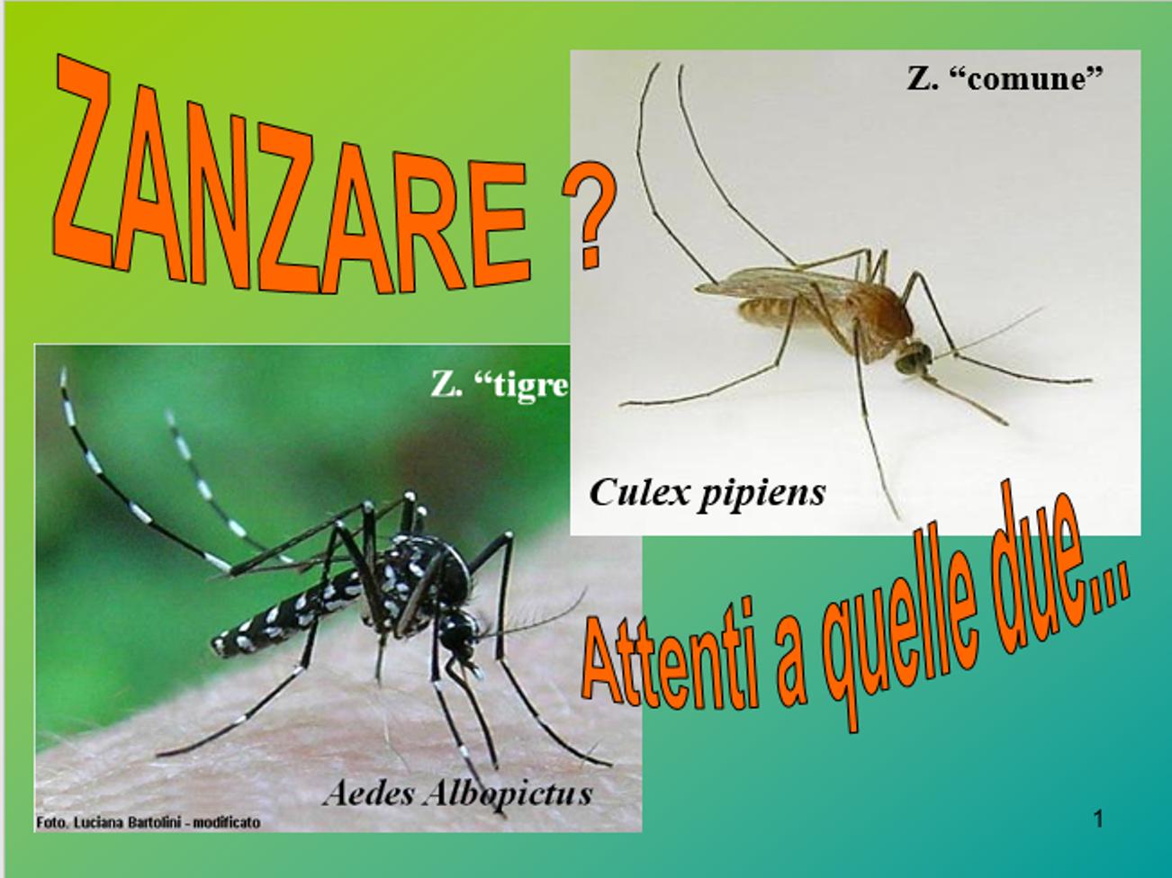 Interventi contro le zanzare a stra il sestante news for Larve zanzare