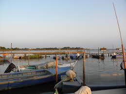 Porto Tolle, la moria delle vongole: gli imprenditori chiedono aiuto