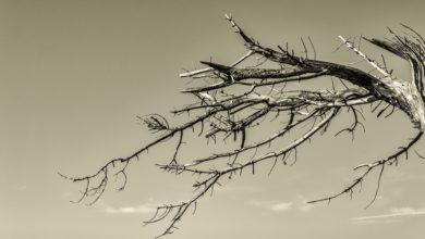 ramo secco