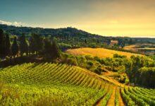 vitinera degustazioni vino